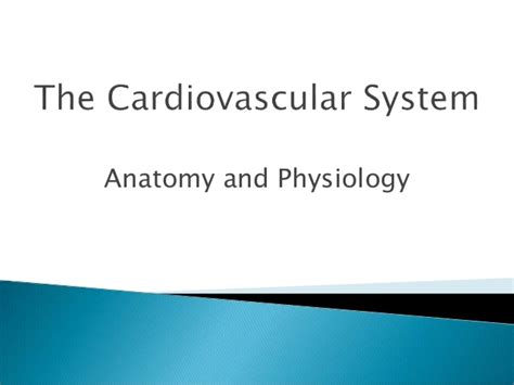 Power Point The Cardiovascular System Anatomy And Physiology Powerpoint On Cardiovascular System