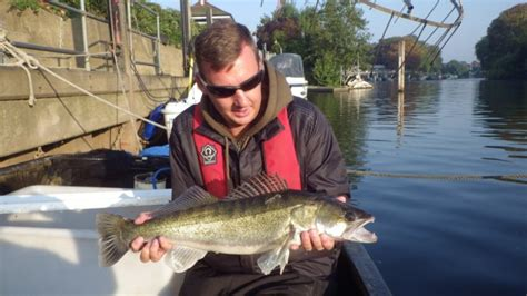 river thames record zander gallery thames anglers conservancy