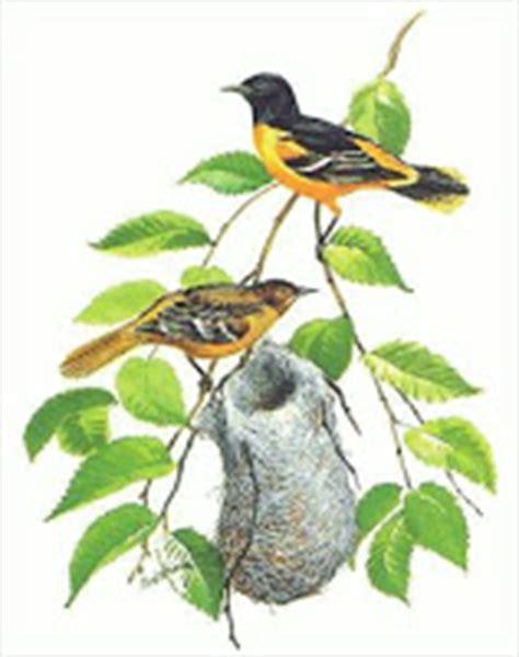 make your own hummingbird nectar baltimore oriole nectar