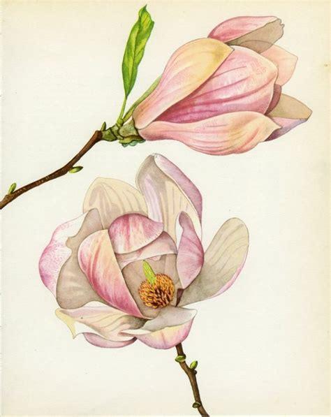 printable magnolia flowers magnolia botanical print google search botanical
