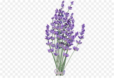 purple watercolor flower png    transparent lavender png