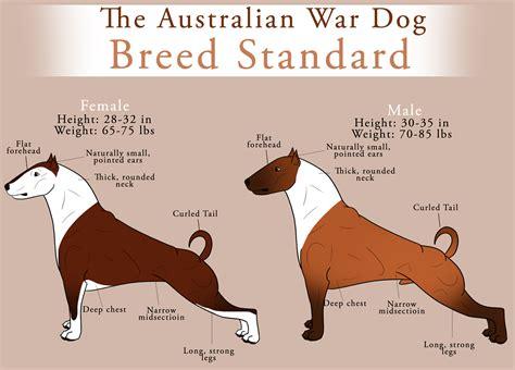 war breeds the australian war breed standard by bv academy on deviantart
