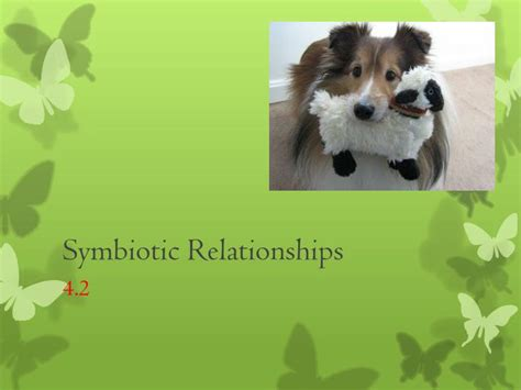 ppt symbiotic relationships powerpoint presentation id