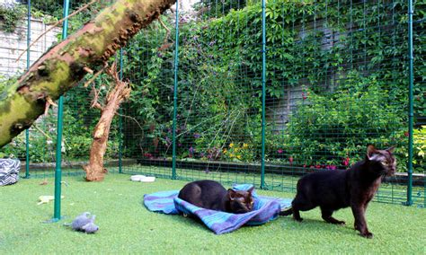 backyard runs outdoor cat run large spacious outdoor cat enclosure