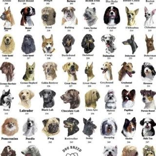 breeds az tag for list of all breeds with name terms all breeds a z with pictures az