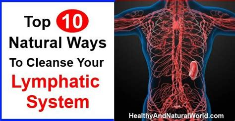Best Way Detox Lymph System by Pin By Gifford On Tips