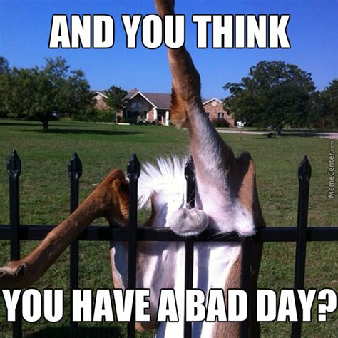 Bad Day Meme - bad day memes image memes at relatably com