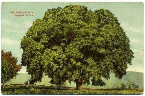 elm tree symbolism elm