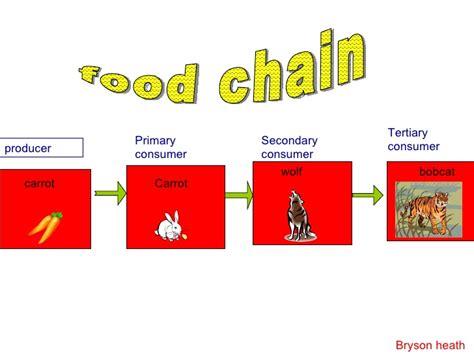 fox food 02 the fox hotel red fox food chain diagram wiring diagram
