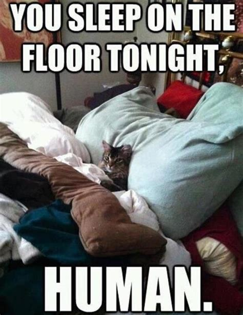 Funny Human Memes - post your funny pics here page 380