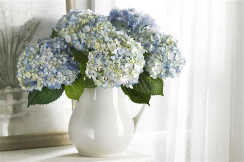 Hydrangea In Vase by Covet Thy Barelypoppins