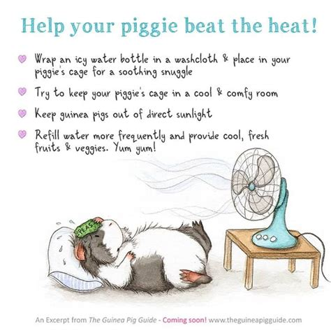 7 Tips On Caring For Pigs by 298 Best Guinea Pigs Images On Guinea Pigs