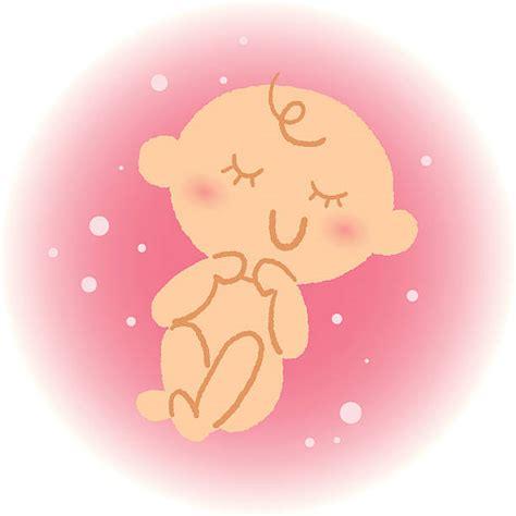 cartoon   baby   womb illustrations