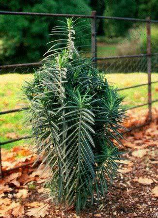 talpe nel giardino rimedi lumache e talpe cosa fare rimedi naturali contro le
