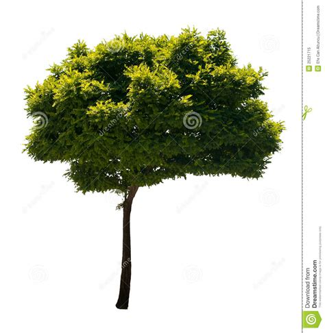 tree timer isolated tree stock image image of decoration isolated