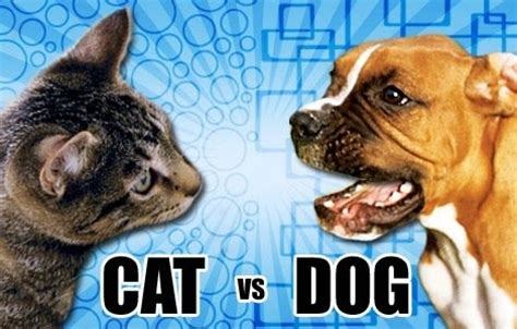 can cats and dogs mate can a cat defeat a in a fair fight quora