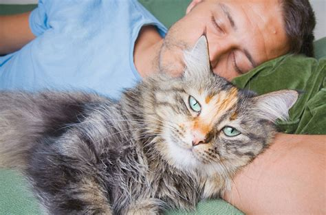 way to euthanize at home pet euthanasia euthanasia cat euthanasia sacramento