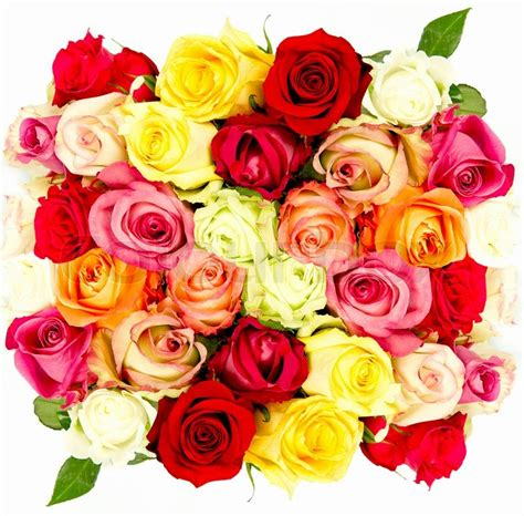 colorful roses colorful roses beautiful flower bouquet on white