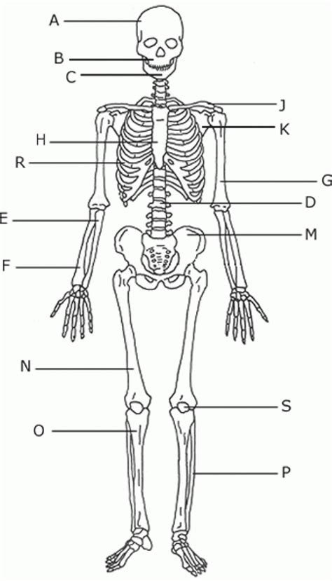 human bones diagram human skeleton not labeled craftbrewswag info