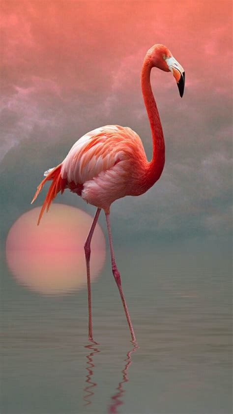 imagenes animal flamenco flamingo alit s pinterest flamingo pink flamingos