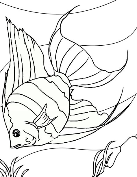 free coloring pages tropical fish free printable fish coloring pages for kids