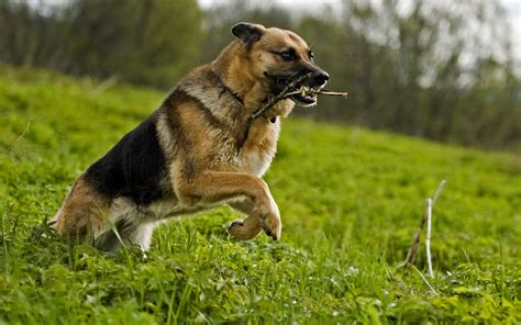Dog Hd Dog Wallpapers Dog Pictures Hd Animal Wallpapers
