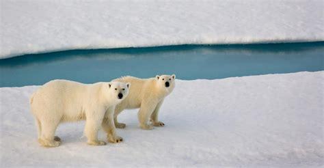 churchill polar tours habitat adventures