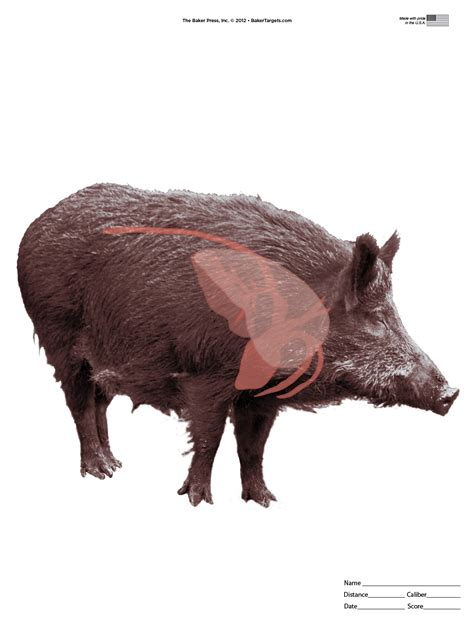 printable pig targets animal targets pictures to pin on pinterest pinsdaddy
