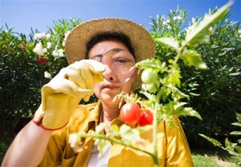 Was Machen Gegen Pilze Im Garten by Pilzbefall Erkennen Und Bek 228 Mpfen Obi Ratgeber