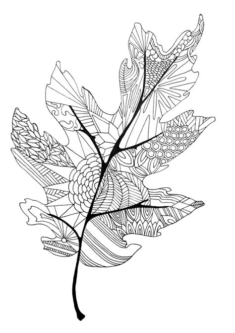 Leaves Coloring Pages For Adults | leaf coloring pages coloringsuite com