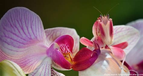 orchid facts interesting facts about praying mantises just fun facts