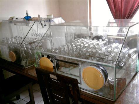 Jual Bibit Anggrek Kultur Jaringan tissue culture and orchidologi perbanyakan bibit pisang