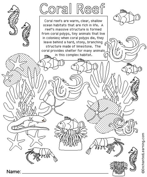 Hawaii Facts For Children A To Z Kids Stuff Coral Reef Coloring Page