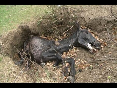 imagenes de unicornios muertos aparecen caballos muertos en euskadi youtube
