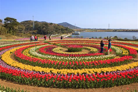 Tulip Flower Garden In India Join The Tulip Festival Of Kashmir Valley Srinagar