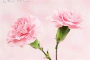 types of pink flowers with pictures ehow