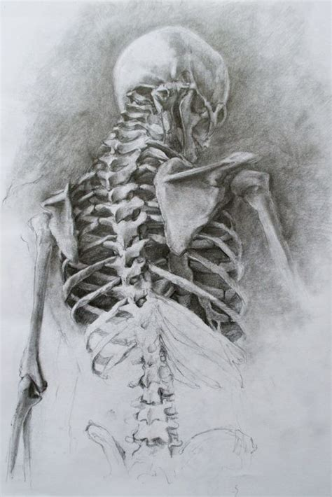 17 best ideas about skeleton drawings on pinterest