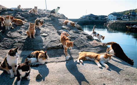 cat island what is cat island popsugar smart living