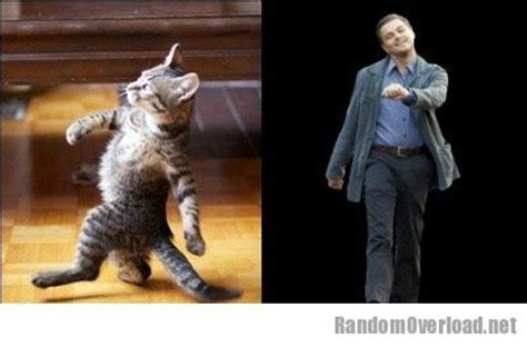 Totally Looks Like Meme Generator - related keywords suggestions for leonardo dicaprio cat meme