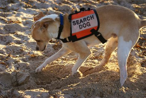 search dogs canines alpha search and recovery