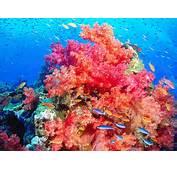 Reef Wallpaper 4508 2592x1944 Px  HDWallSource