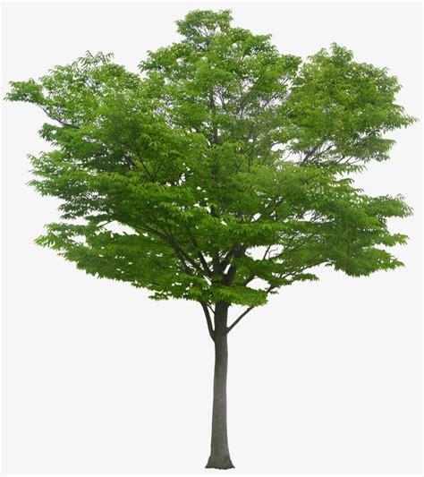 imagenes sin fondo de arboles un 225 rbol tree madera hojas png image para descarga gratuita