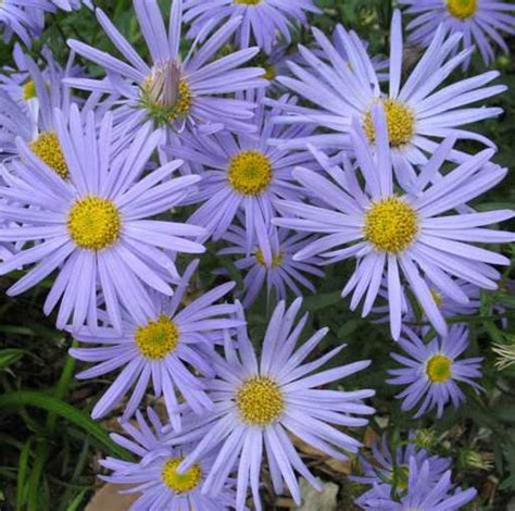 fall blooming plants zone 5 1000 images about zone 5 flowers on pinterest sun