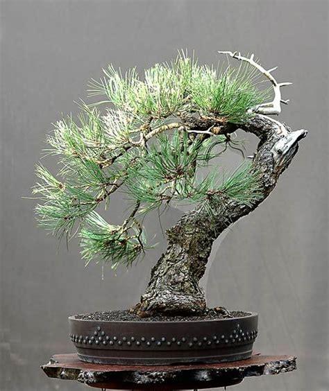 zen garden 27 photos home decor 11401 pines blvd 203 best images about walter pall bonsai on pinterest