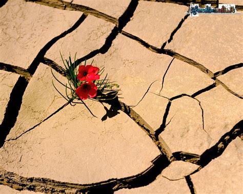 fiore nel deserto sfondilandia it sfondo gratis di fiore nel deserto per
