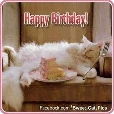 catsbirthday wishes images   birthday wishes birthday cards cat birthday wishes