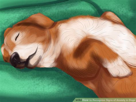 signs of anxiety in dogs how to recognize signs of anxiety in dogs with pictures