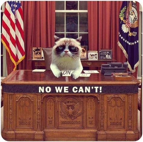 grumpy cat for president 2016 on fox right now current events and social
