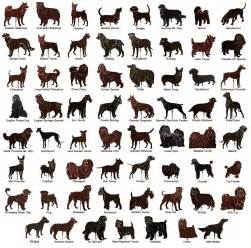 types of dogs every thing about dogs general information