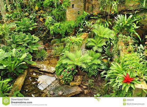 Tropical Garden Green Plants Stock Photo Image 23905294 Green Garden Flowers
